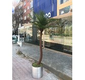 Uv Korumalı Palm Tree 2m