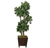 Yapay Ağaç Pittosporum Bonsai